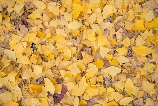 Image inspi insta Feuilles d'automne